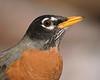 Portraits : Songbird Portraits - See also http://kenn3d.wordpress.com/2014/03/11/superzoom-songbird-portraits/  -  Backyard Birding with Kenn & Temple