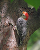 Birds in Trees :