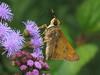 K&TShots - Flora&Fauna : Flora & Fauna