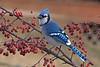 Birds Blossoms & Butterflies Vol 4 [2010] :